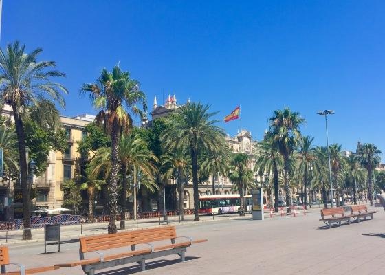 Barcelona, Spain palm trees