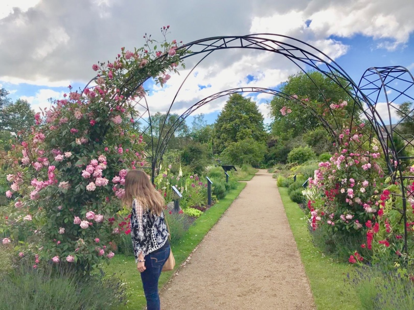 pink and red roses grow on an arched trelis in Oxford University Botanic Gardens
